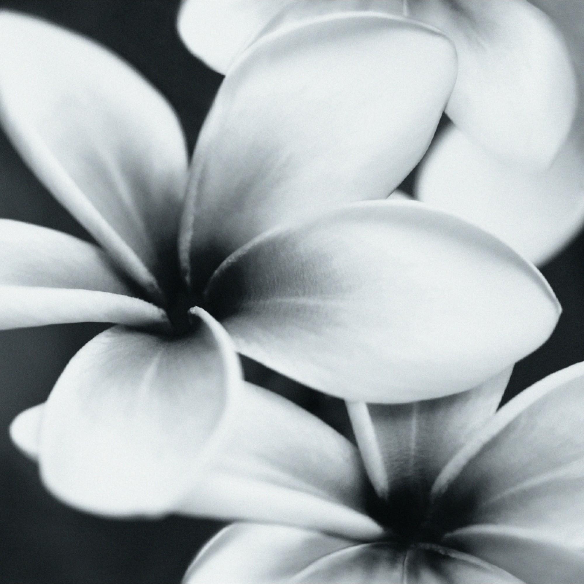 красивые черно-белые открытки высокого разрешения избежать ряби